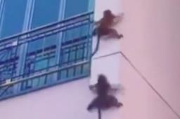 原来猴子还能这样下楼
