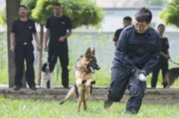 中国刑警学院竞售54只淘汰受训犬